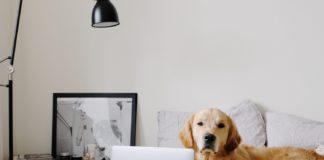 pet friendly housing guide