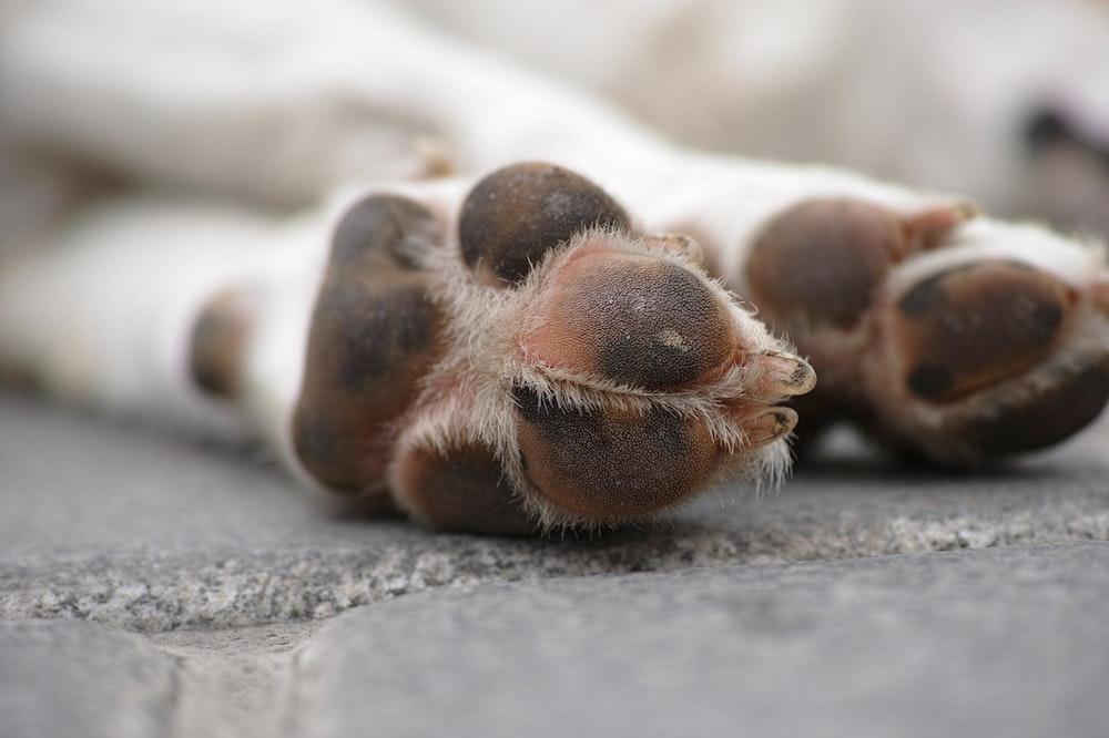 underside dog paws