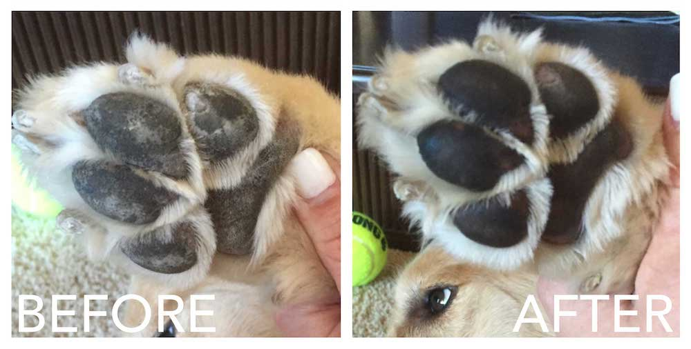 dog paw balm before and after