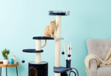 midwest nuvo cat playhouse