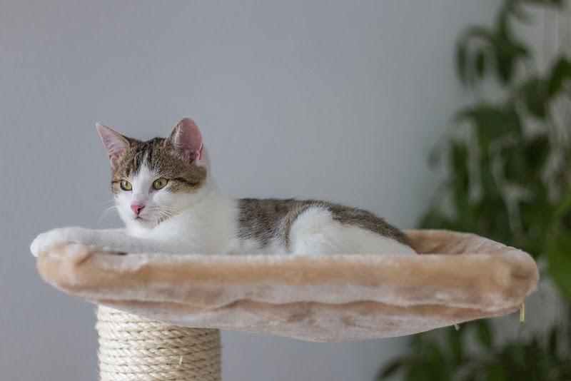 white cat on playhouse