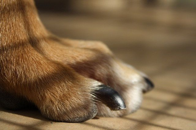 dog nails on floor