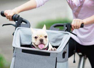 barkbay dog carrier