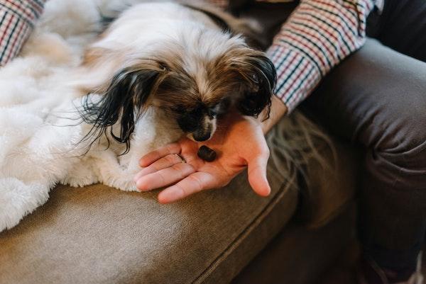 dog eating chewable vitamin