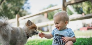 small dog and baby
