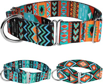 colorful martingale collar