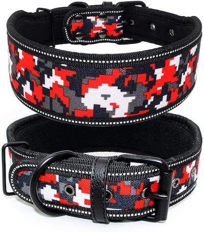 colorful wide dog collar