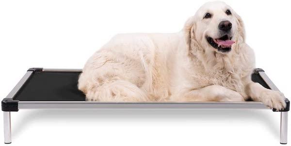 dog on aluminum bed