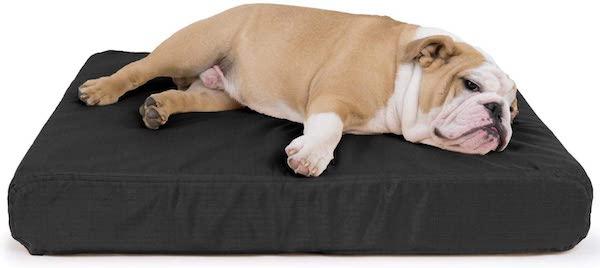 bulldog on dog bed