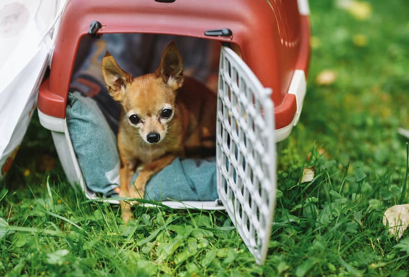 small dog inside portable kennel