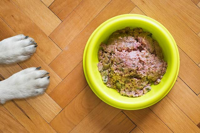 dog bowl with wet food