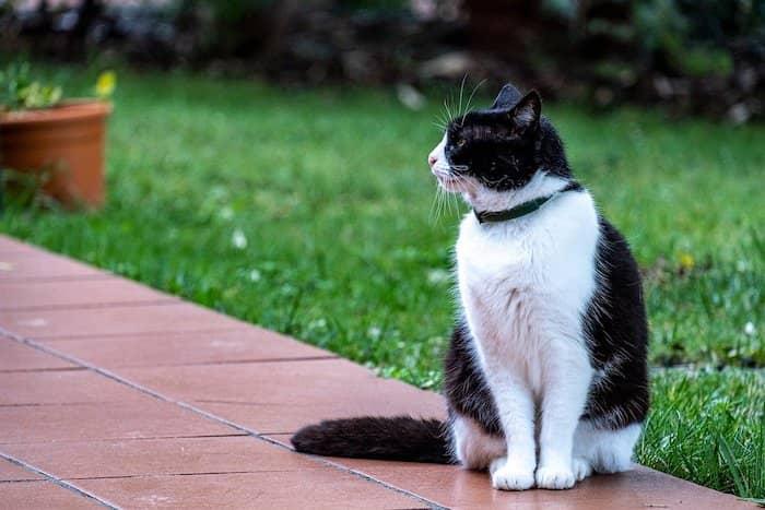 cat wearing collar