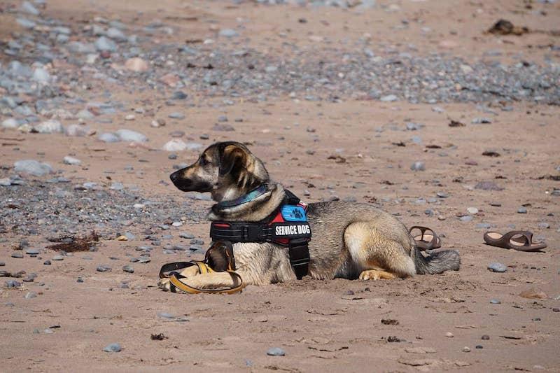 service dog on beach