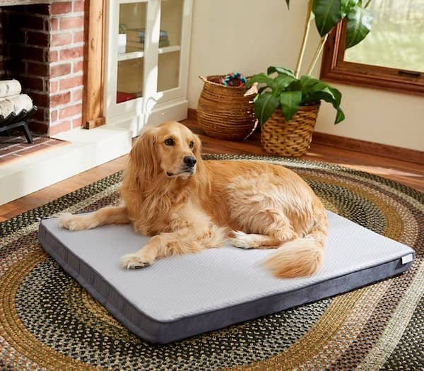 frisco cooling orthopedic dog bed