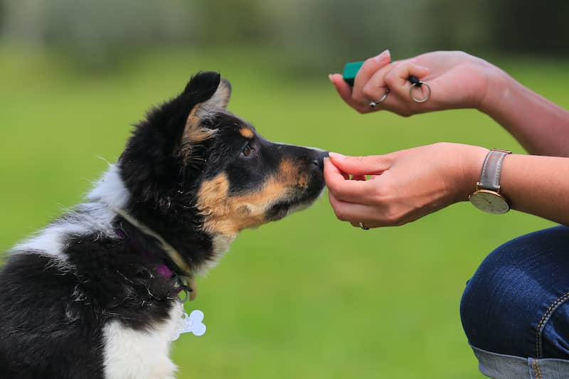 puppy training with owner